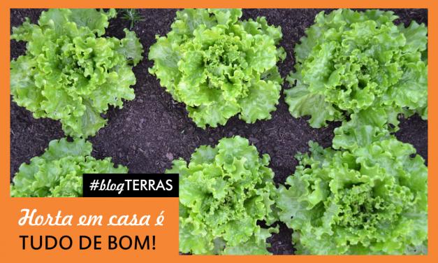 Horta é saúde: Dicas para ter sua horta em casa